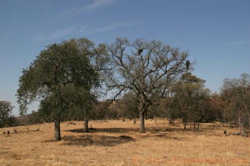 Paregien Ranch, July 20, 2013